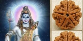 rudraksha-meaning-benefits-14-Mukhi-Hindi